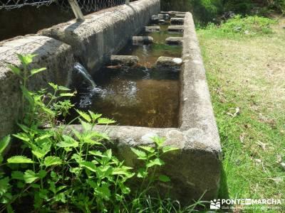 Pinares de la Angostura en Piedralaves;puente de san isidro rutas montaña